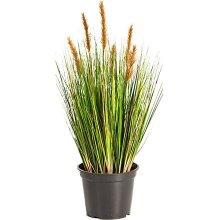 Трава, осока, злаки