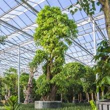 Эксклюзивные растения