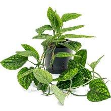 Гидропонные растения