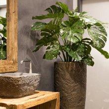 Растения для ресторана